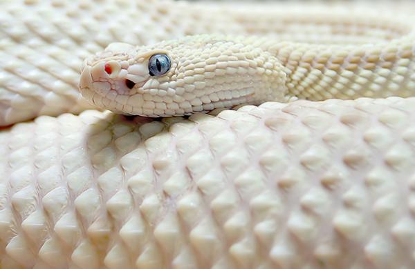 albin28