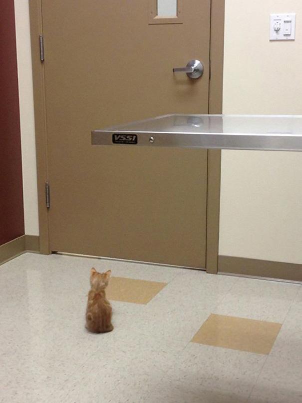 macky u veterinara (4)