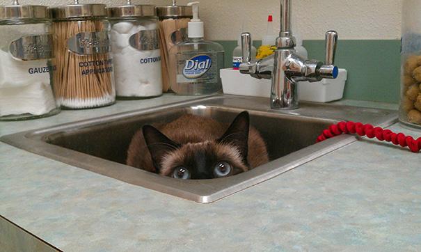 mačky u veterinára (6)