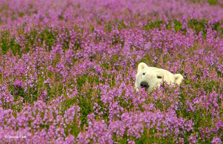 medved sa hra na luke (10)