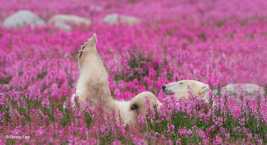 medved sa hra na luke (2)