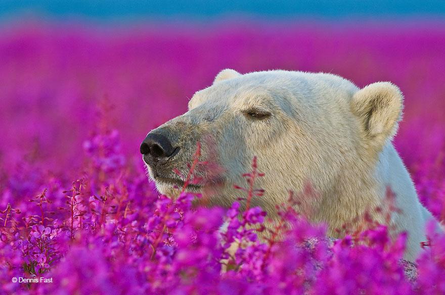 medved sa hra na luke (7)