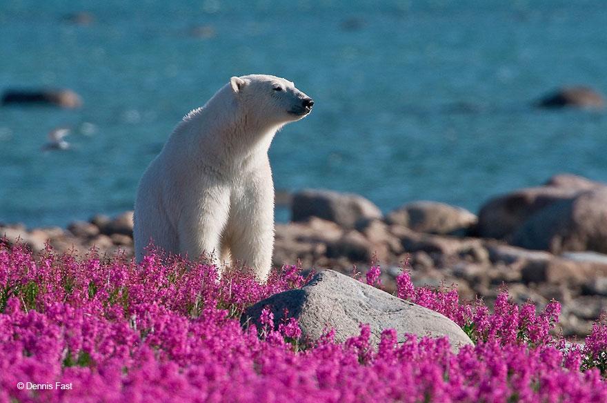 medved sa hra na luke (8)