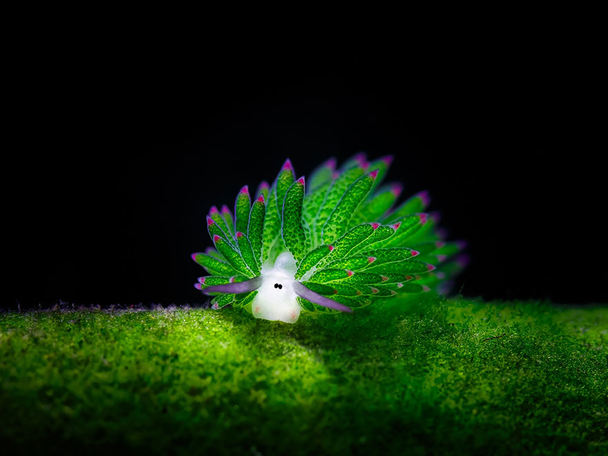 slimáky z oceána (1)