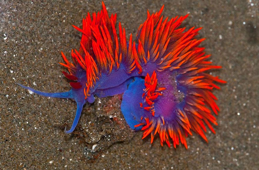 slimáky z oceána (12)