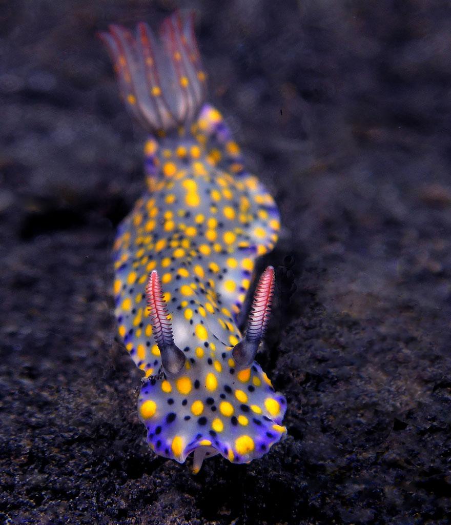slimáky z oceána (18)