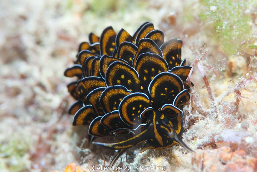 slimáky z oceána (7)