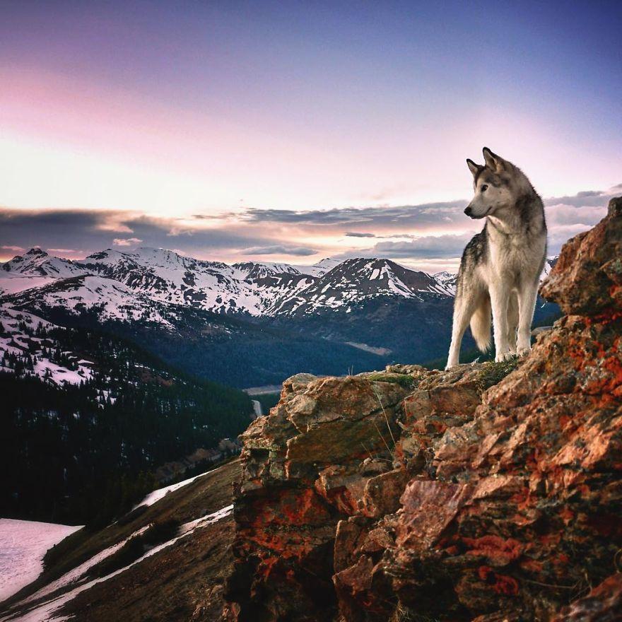 pes na vylete loki (7)