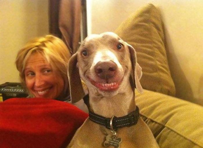 stastne psy (2)
