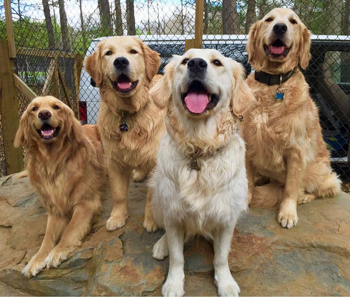 najšťastnejší psíci (4)