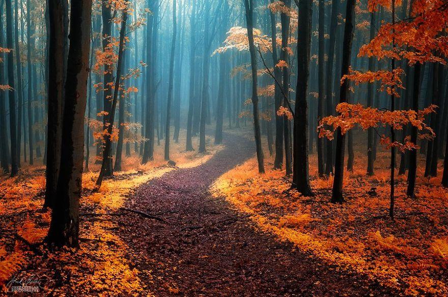 ceske lesy na jesen (1)