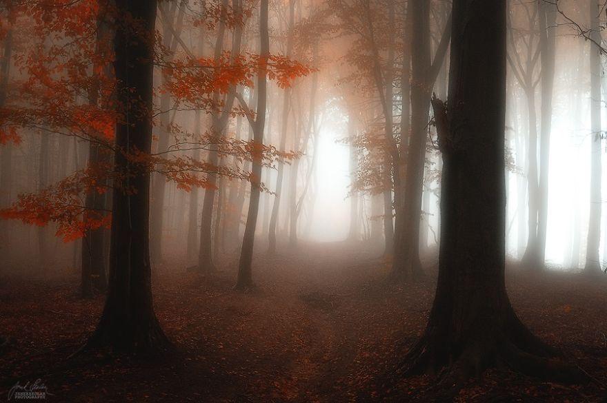 ceske lesy na jesen (10)