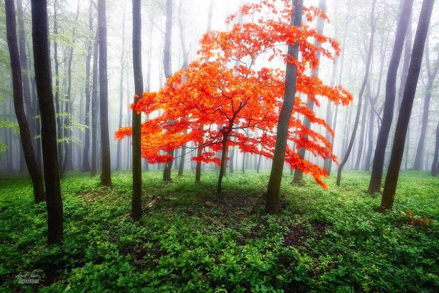 ceske lesy na jesen (11)