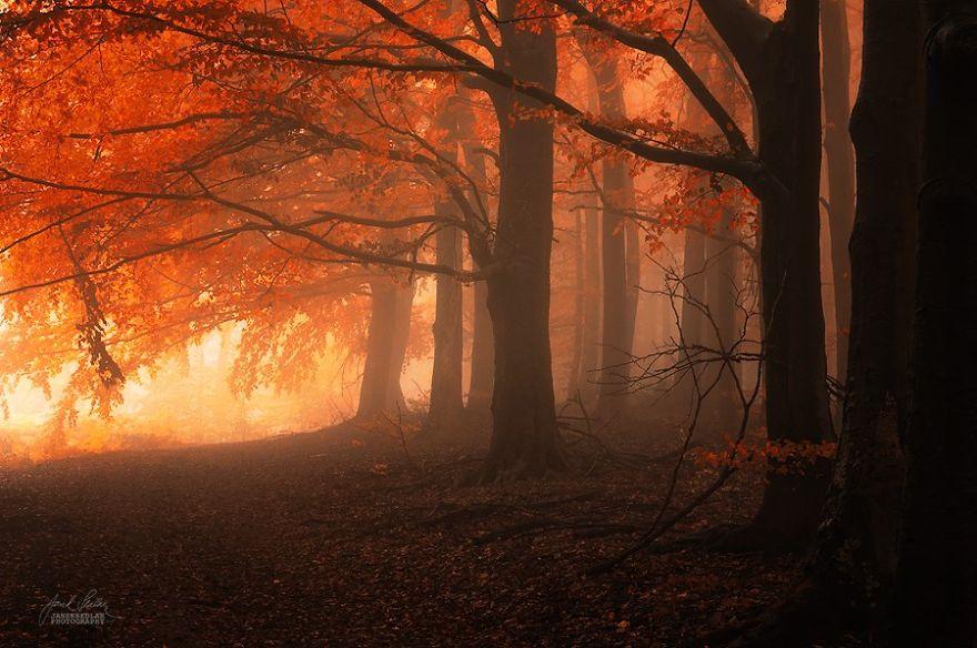 ceske lesy na jesen (12)