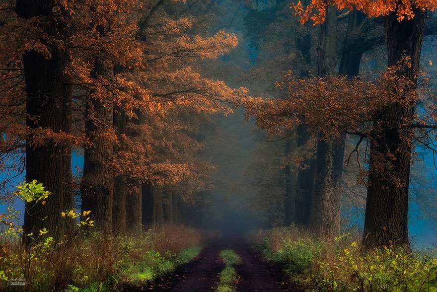 ceske lesy na jesen (13)