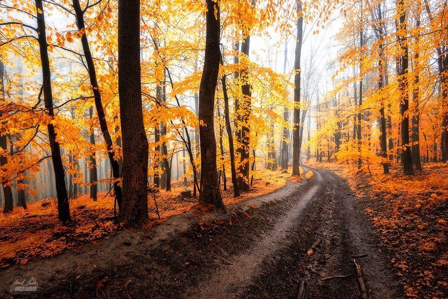 jesenné fotky českých lesov (14)