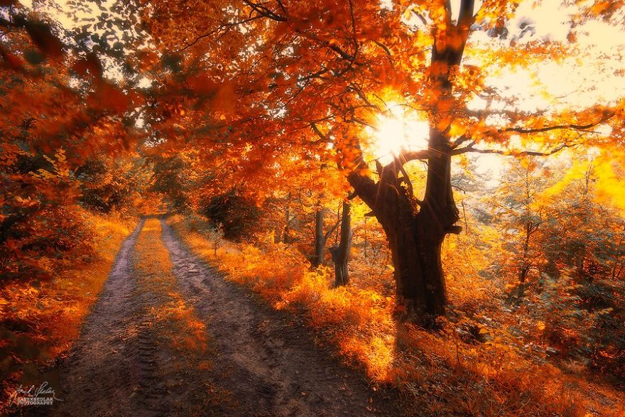 ceske lesy na jesen (15)