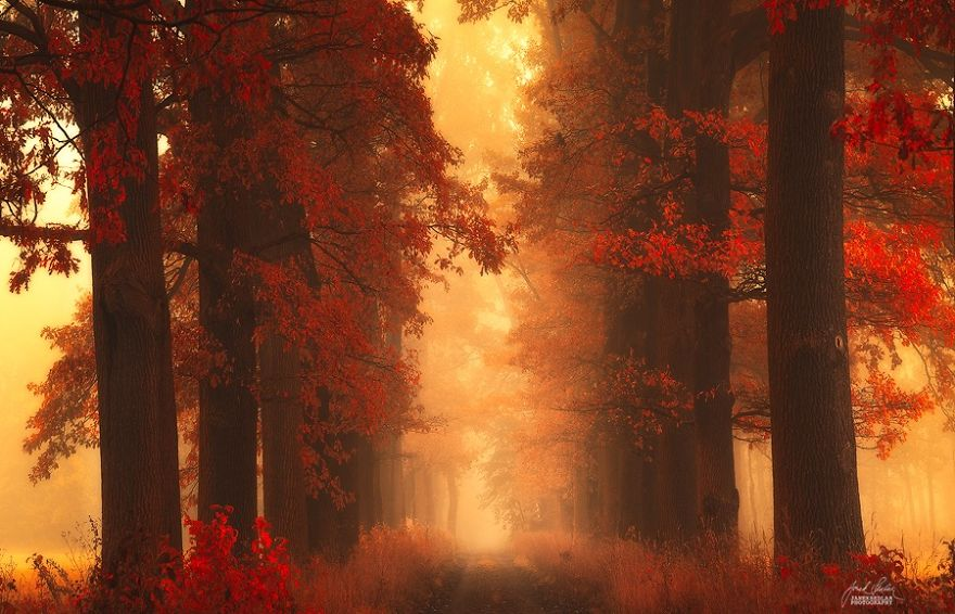 ceske lesy na jesen (16)