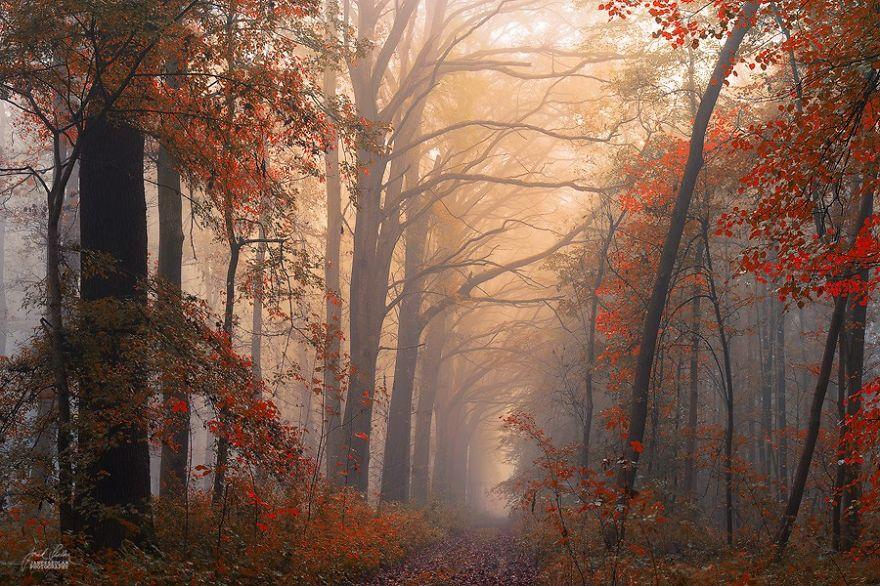 ceske lesy na jesen (17)