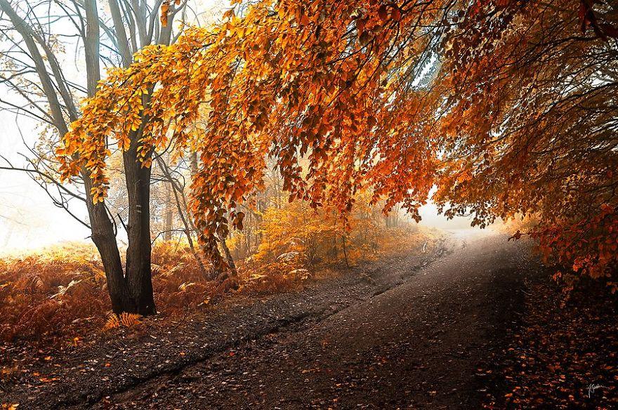 ceske lesy na jesen (18)