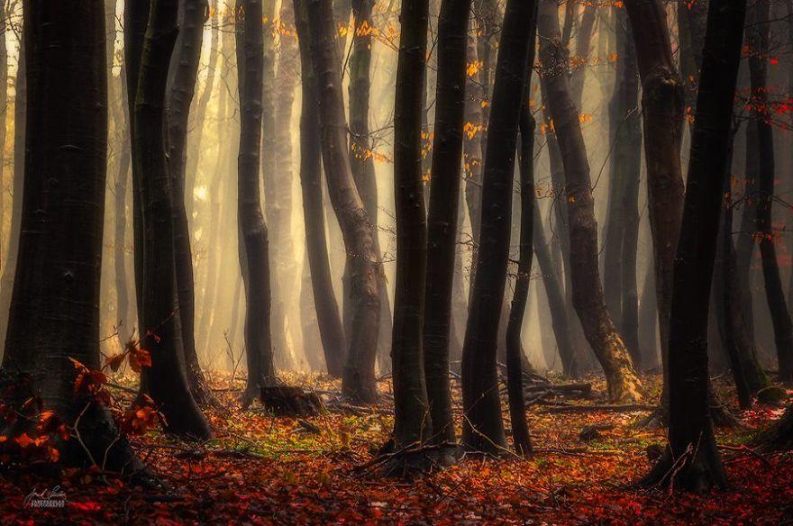 ceske lesy na jesen (19)