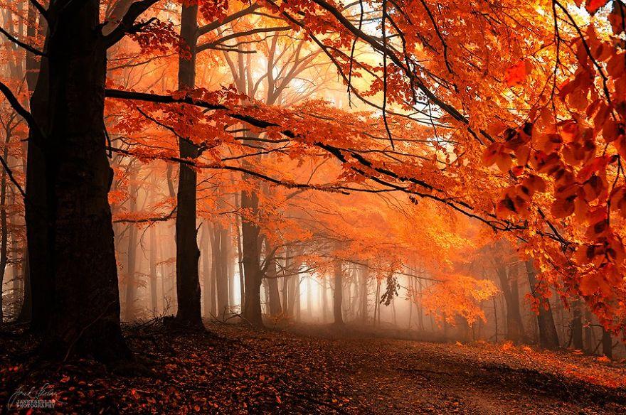 ceske lesy na jesen (2)