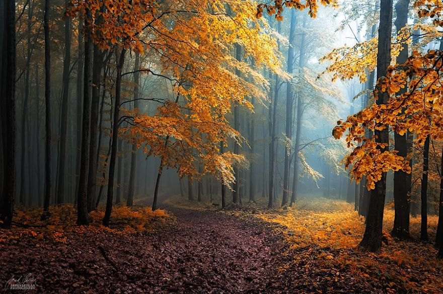 ceske lesy na jesen (20)