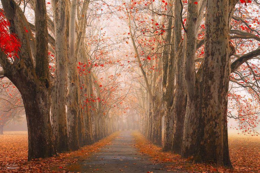 jesenné fotky českých lesov (3)