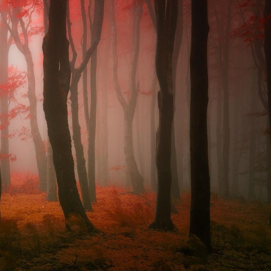 ceske lesy na jesen (4)