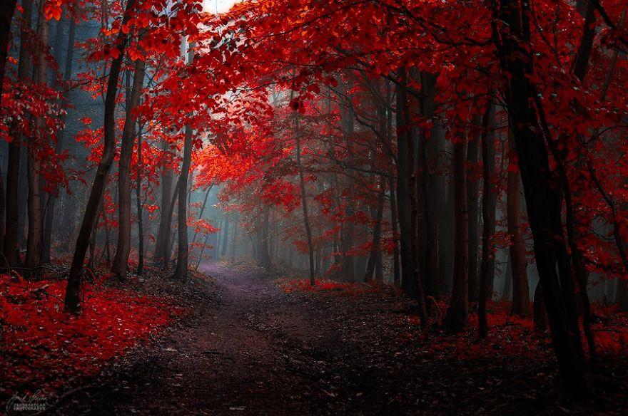 ceske lesy na jesen (5)