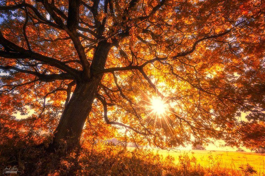 ceske lesy na jesen (7)