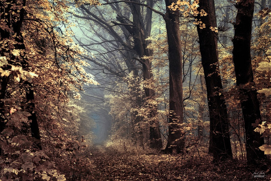 ceske lesy na jesen (8)
