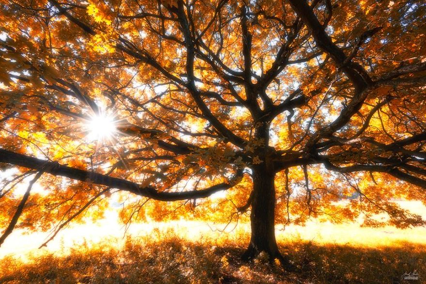 ceske lesy na jesen (9)