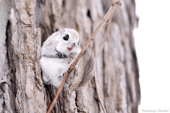 lietajúce veveričky (11)