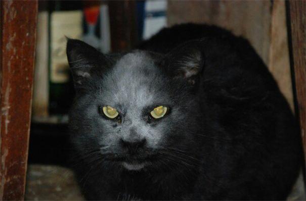 macka z pekla (1)