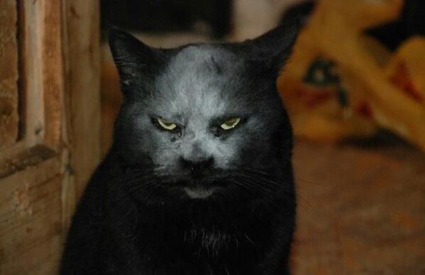 mačka z pekla (2)