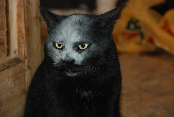 macka z pekla (3)