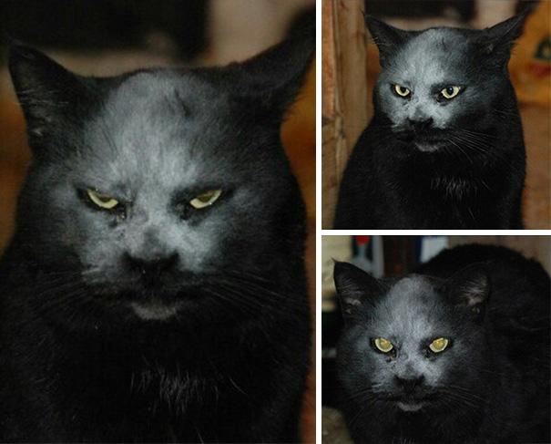 mačka z pekla (4)