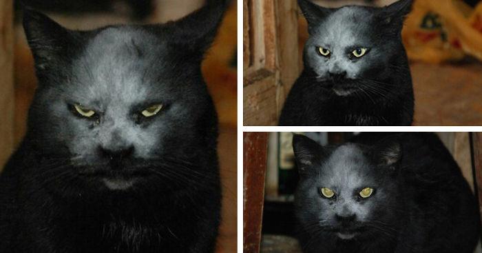 macka z pekla (5)