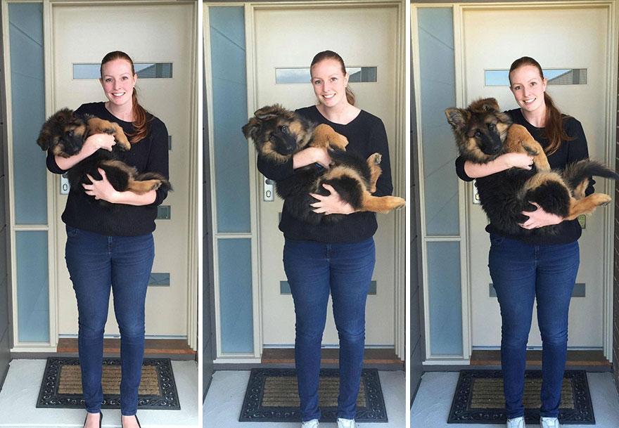 pes vyrástol za 8 mesiacov (1)