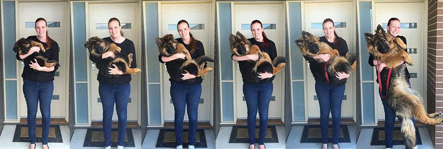 pes vyrástol za 8 mesiacov (3)