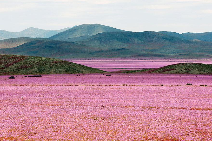 zapršalo na púšti (1)