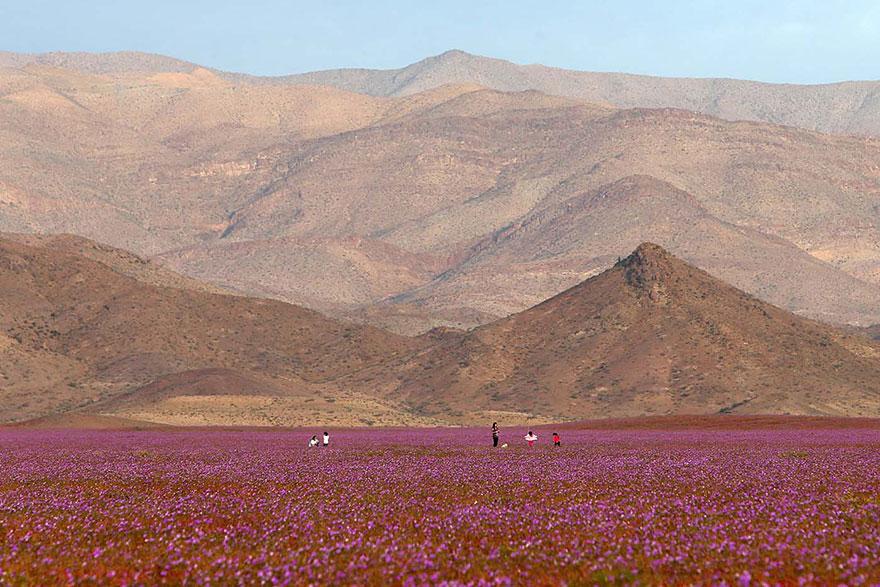zapršalo na púšti (3)