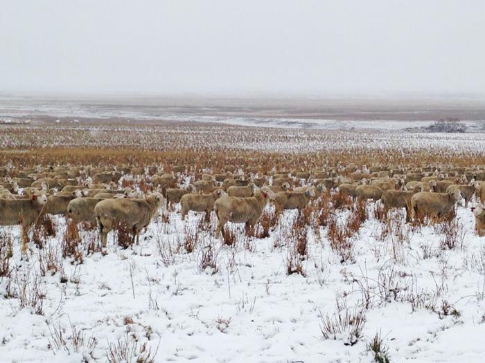 550 oviec (3)
