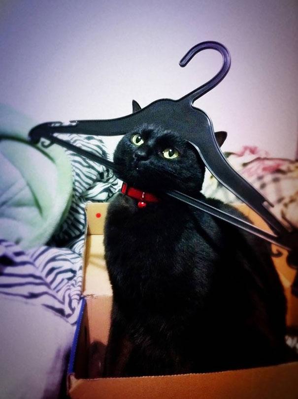 mačky ľutujú (11)
