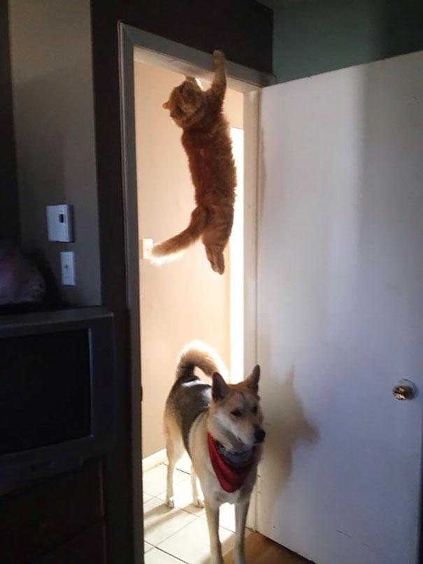 mačky ľutujú (6)
