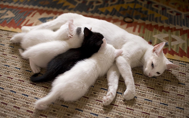 Hrdé mačky-matky a ich mačiatka a4f5915a7bc