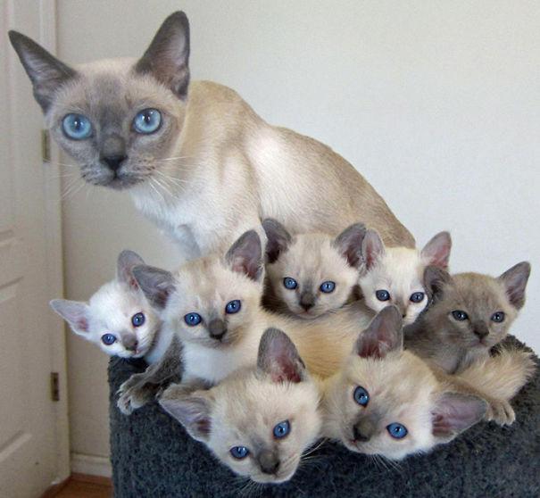 mačky-matky (16)