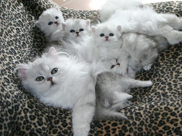 mačky-matky (3)