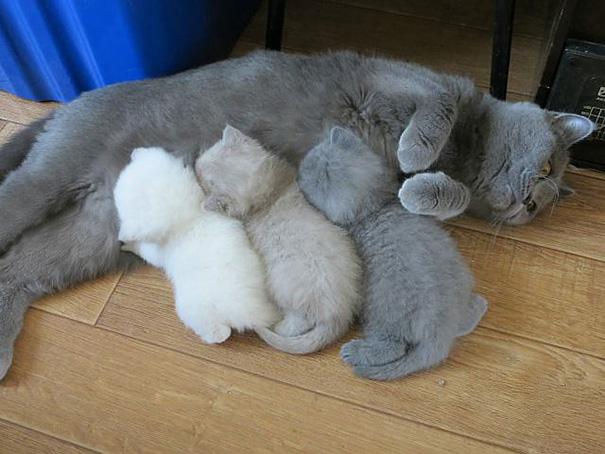 mačky-matky (6)